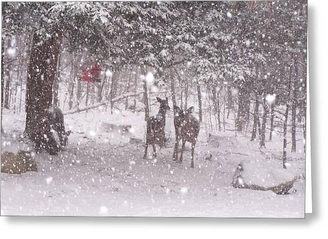 Winter 2014 Greeting Card