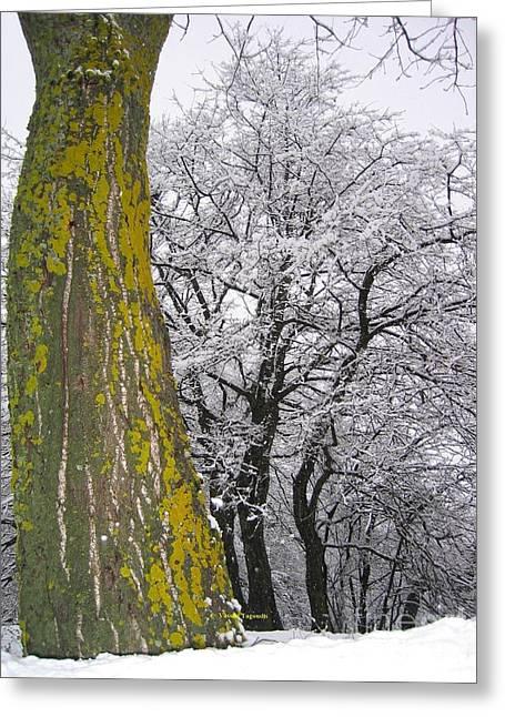 Winter  4  Greeting Card by Vassilis Tagoudis