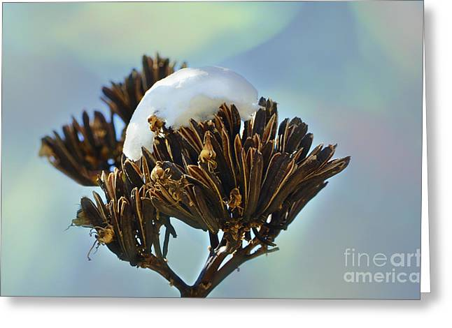 Winter Agave Bloom Greeting Card