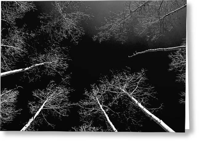 Greeting Card featuring the photograph Winter Aspen  by Eric Rundle