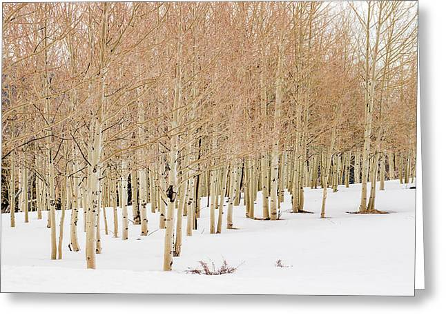 Winter Aspen Forest Greeting Card by Southwindow Eugenia Rey-Guerra