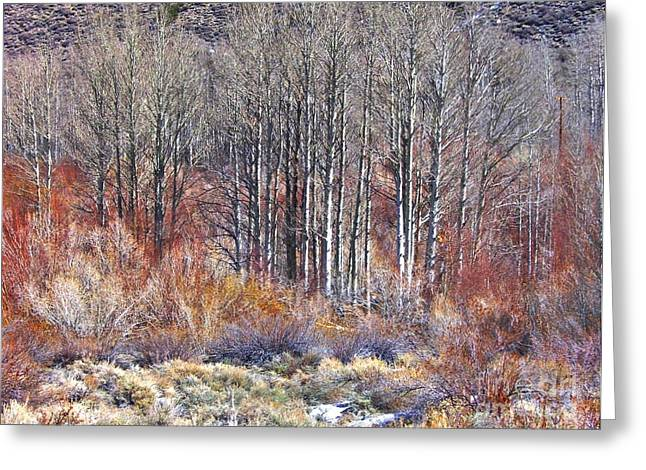 Winter Aspen Greeting Card