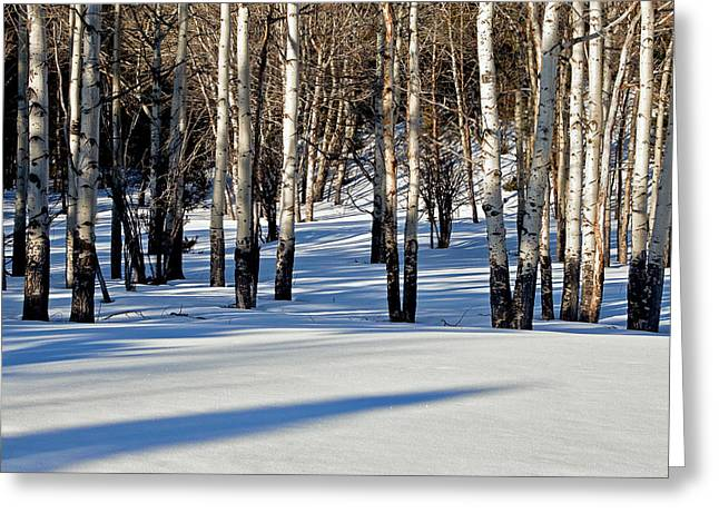 Greeting Card featuring the photograph Winter Aspens by Jack Bell