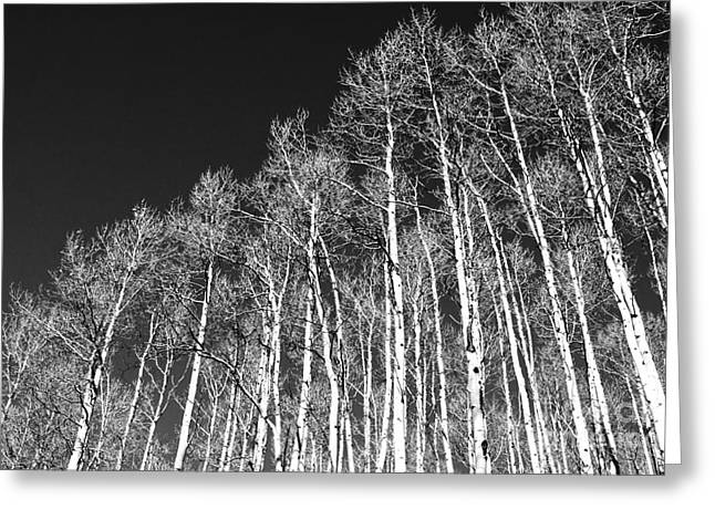 Greeting Card featuring the photograph Winter Aspens by Roselynne Broussard