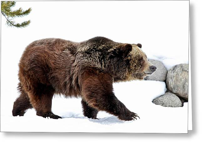 Winter Bear Walk Greeting Card