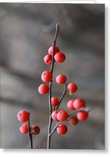 Greeting Card featuring the photograph Winter Berries by Vadim Levin