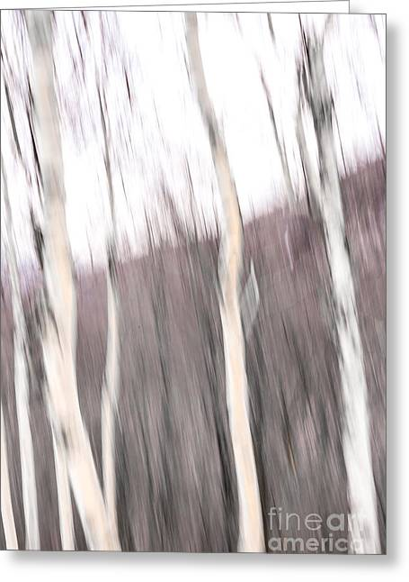 Winter Birches Tryptich 1 Greeting Card by Susan Cole Kelly Impressions
