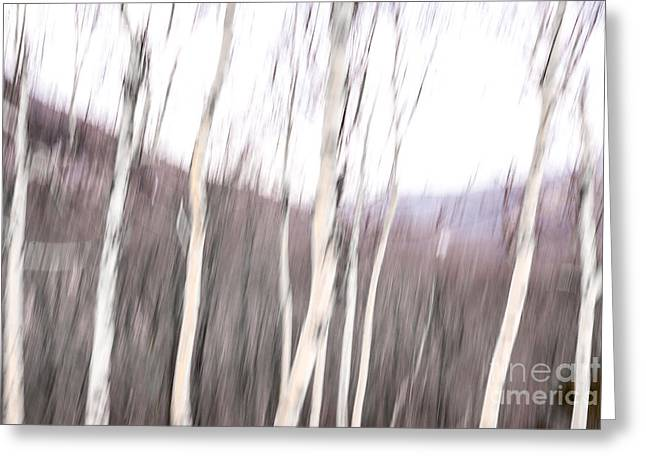 Winter Birches Tryptich 2 Greeting Card by Susan Cole Kelly Impressions