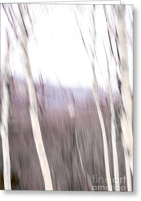 Winter Birches Tryptich 3 Greeting Card by Susan Cole Kelly Impressions