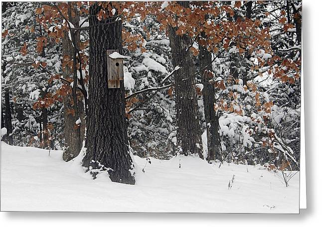 Greeting Card featuring the photograph Winter Bird House by Wayne Meyer