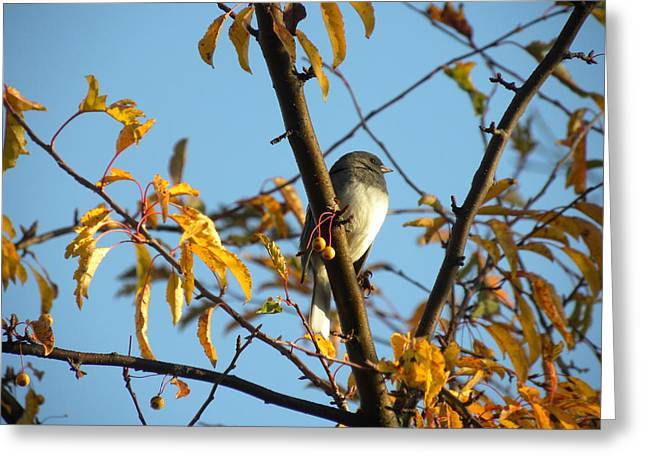 Greeting Card featuring the photograph Winter Bird by Teresa Schomig