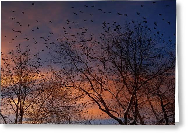 Winter Birds Greeting Card by Utah Images