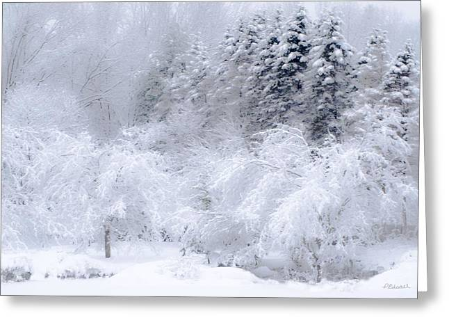 Winter Bliss Greeting Card by Pat Edsall