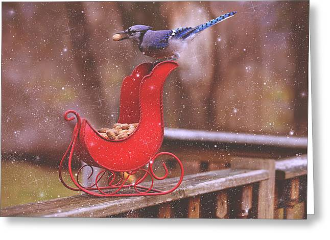 Winter Blue Jay #1 Greeting Card