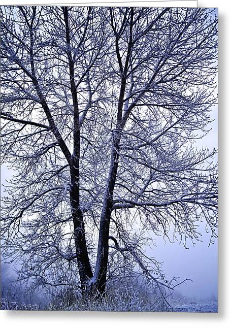 Winter Tree In Blue Fog Greeting Card