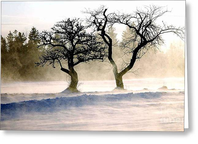 Winter Bluster Greeting Card