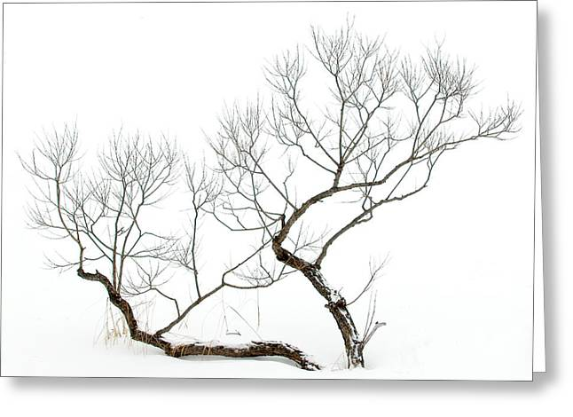 Greeting Card featuring the photograph Winter Bonsai by Rob Huntley