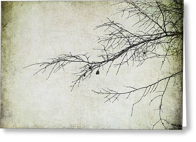 Winter Branch Greeting Card by Suzanne Barber