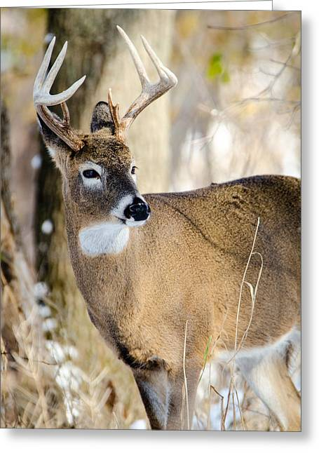Winter Buck Greeting Card
