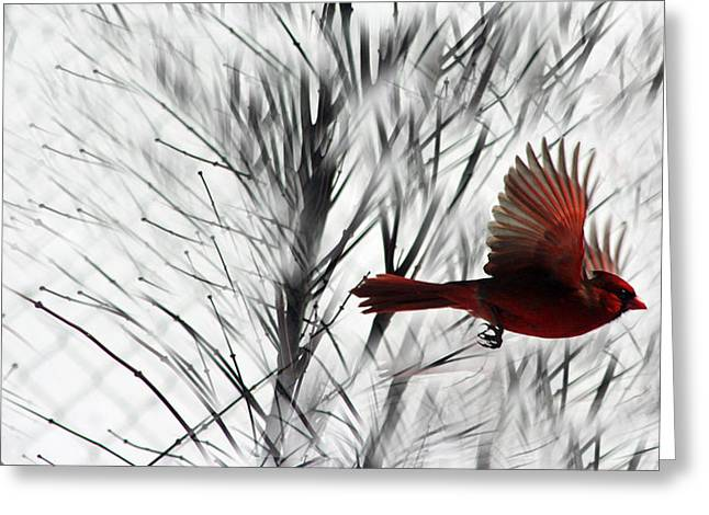 Winter Cardinal Greeting Card by Heather Applegate
