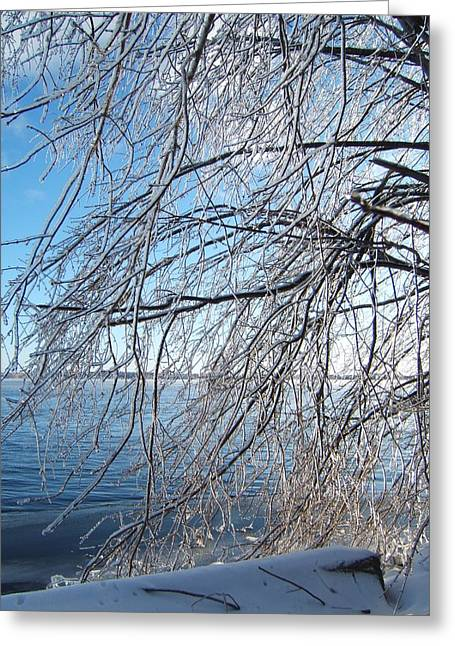 Winter Chill Greeting Card by Margaret McDermott