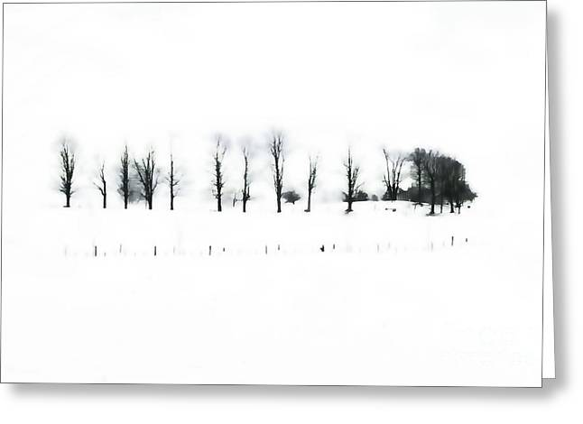 Winter Contrast Greeting Card by Andrea Kollo