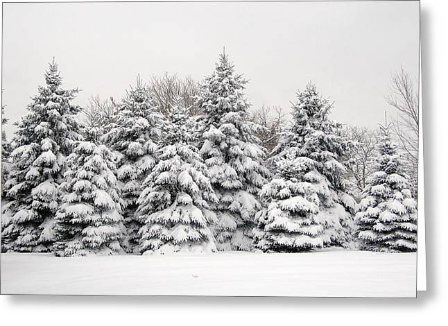 Winter Copse Greeting Card