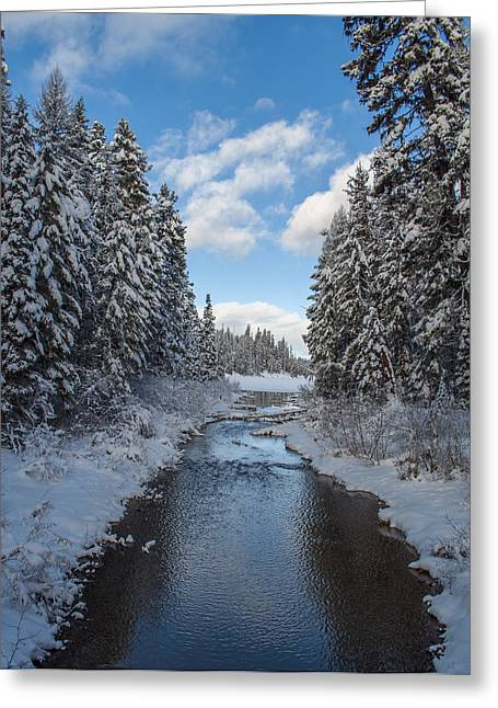 Winter Creek Greeting Card by Fran Riley