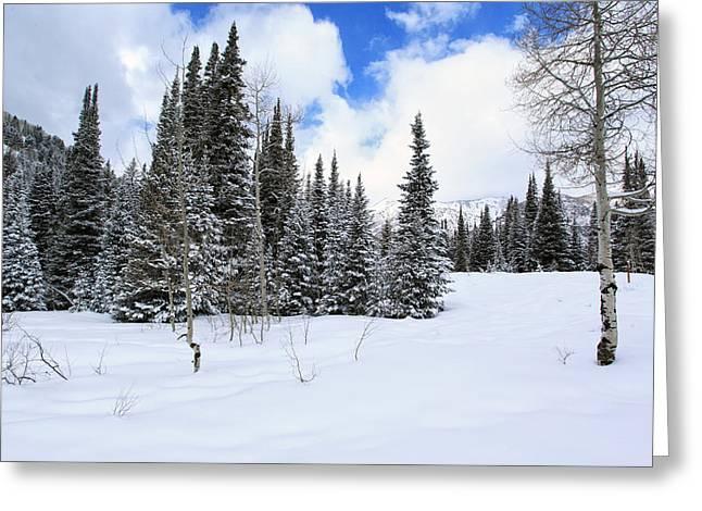 Winter Greeting Card by Darryl Wilkinson