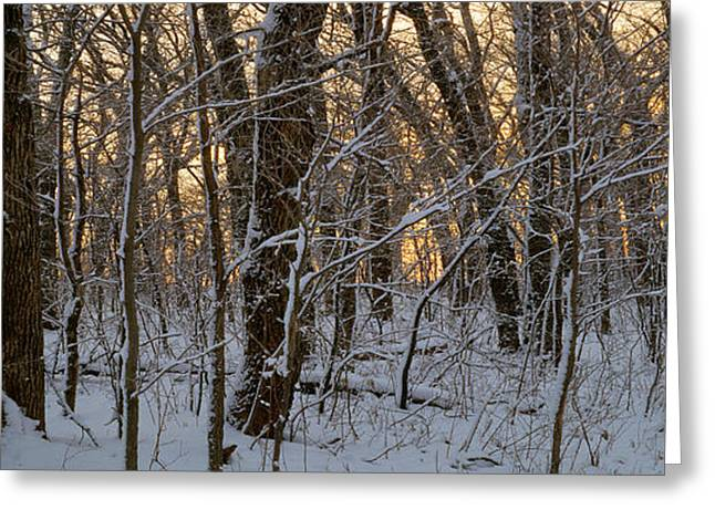 Winter Dawn Greeting Card
