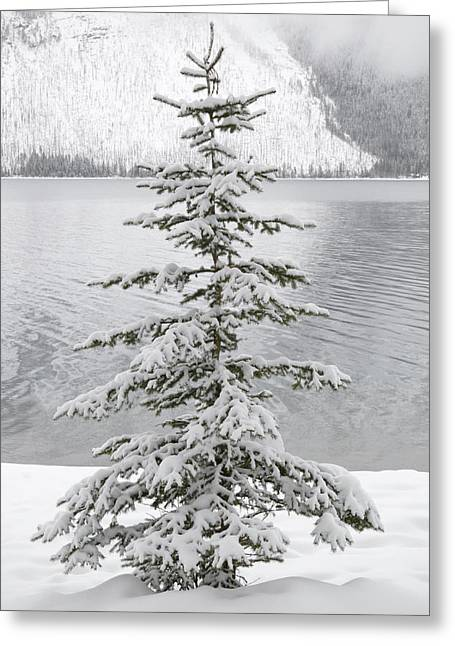 Winter Decor Greeting Card