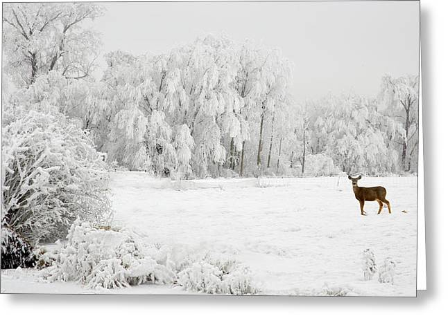 Winter Doe Greeting Card