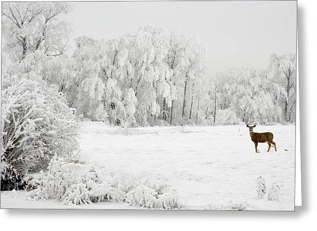 Winter Doe Greeting Card by Mary Jo Allen
