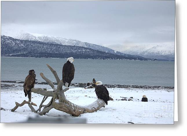 Winter Eagles Greeting Card