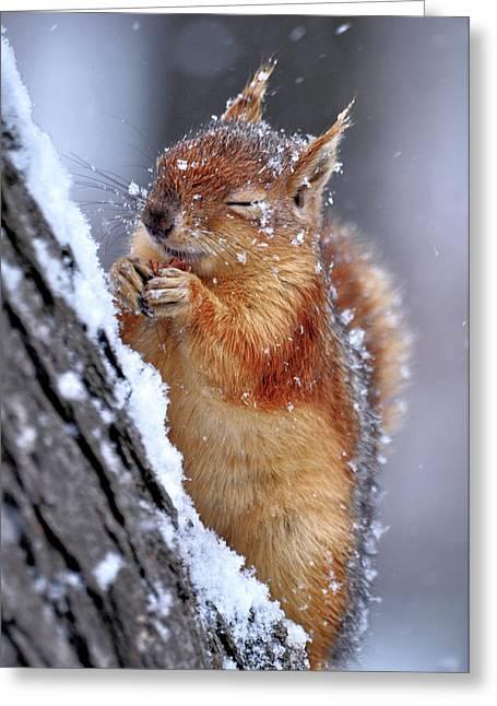 Winter Greeting Card by Ervin Kobak?i
