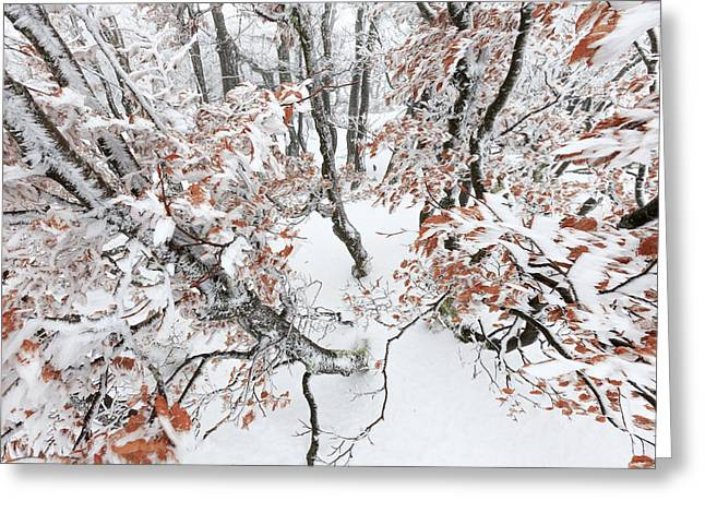 Winter European Beech Forest In Vosges Greeting Card by Heike Odermatt