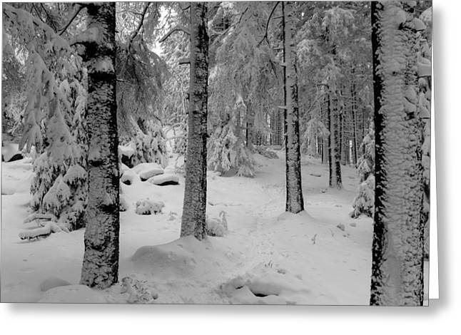 Winter Fairy Tale Forest Greeting Card by Andreas Levi