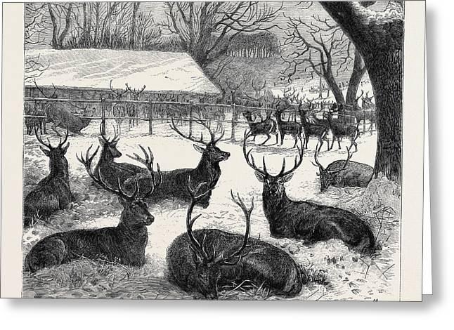 Winter Feeding In Windsor Park, 1870 Greeting Card
