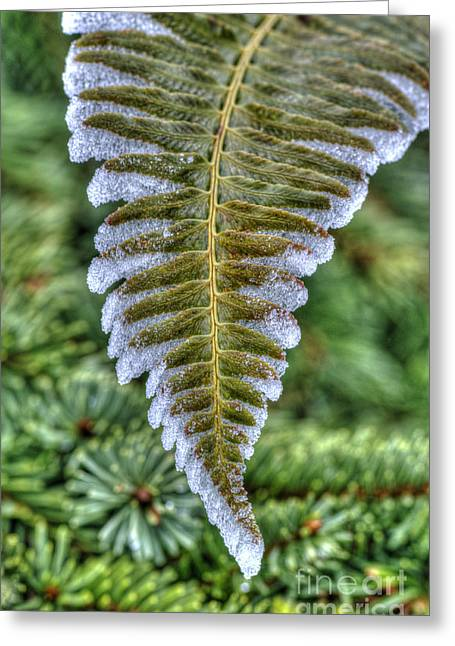 Winter Fern Greeting Card by Sarah Schroder