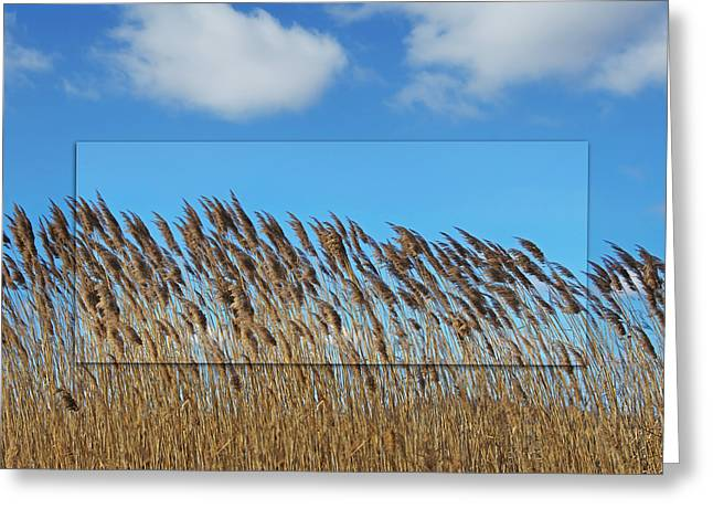 Prairie Grasslands Greeting Card by Steven  Michael