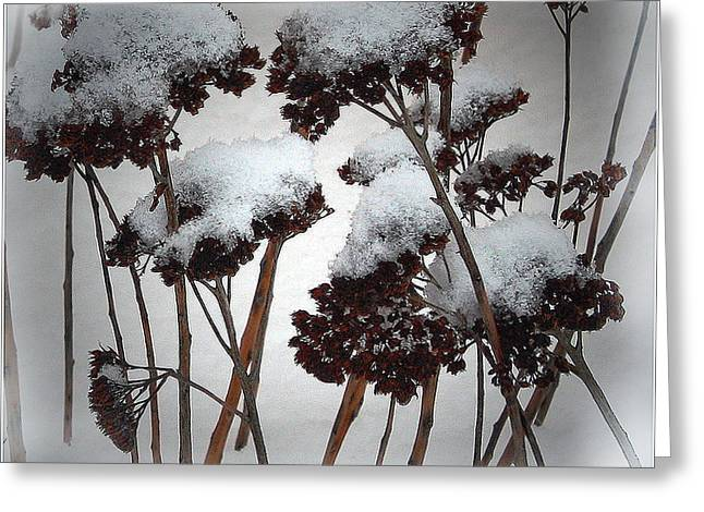 Winter Flowers Greeting Card by Mikki Cucuzzo