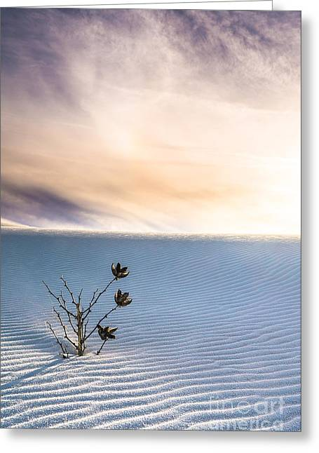 Winter Flowers Of White Sands Yucca Greeting Card
