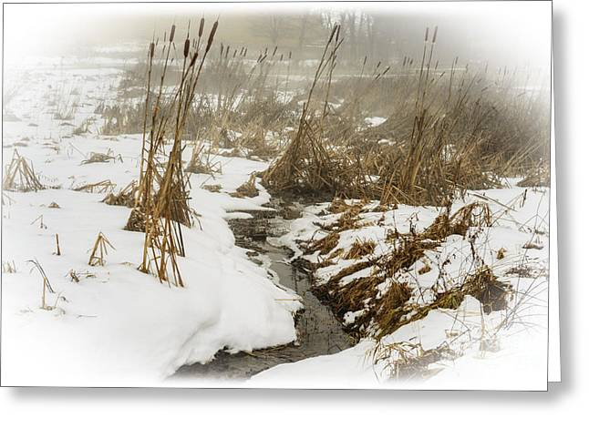 Winter Fog And Cattails Greeting Card by Thomas R Fletcher