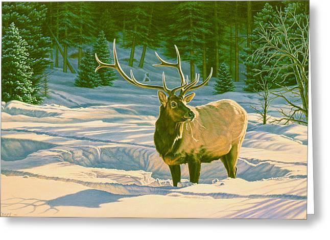 Winter Forage - Elk Greeting Card by Paul Krapf