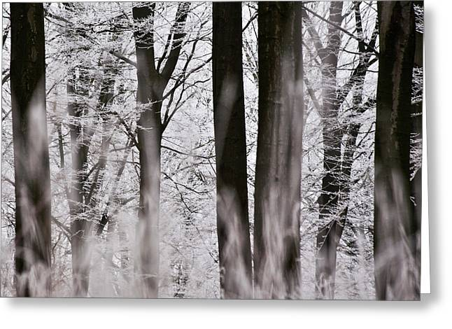 Winter Forest 1 Greeting Card by Heiko Koehrer-Wagner
