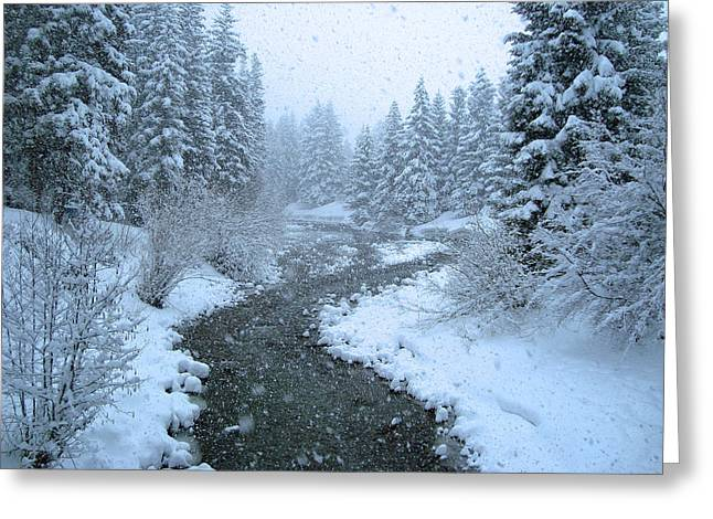 Winter Forest Greeting Card by David Rucker