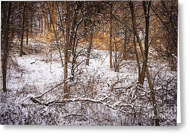 Winter Forest Greeting Card by Elena Elisseeva