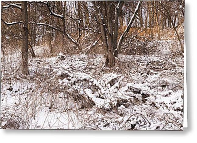 Winter Forest Panorama Greeting Card by Elena Elisseeva