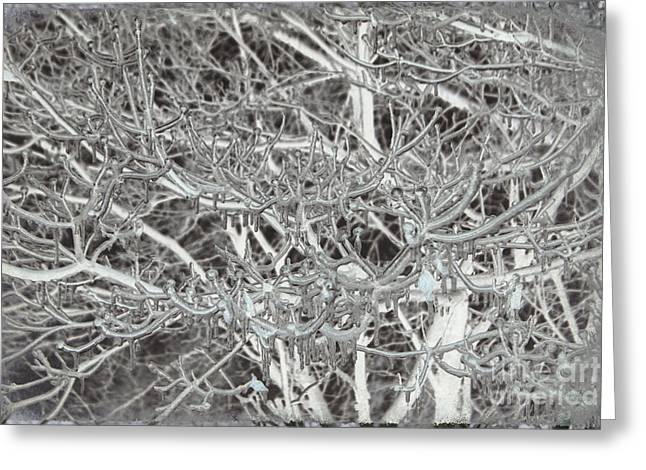 Winter Freeze Greeting Card by Arlene Carmel