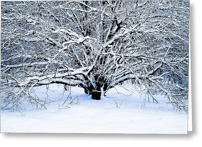 Winter Fresh Greeting Card